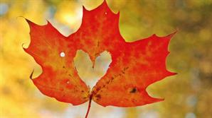 fall maple leaf with heart cut out of the middle